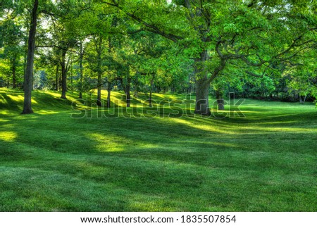 Walnut trees in rolling parkland in London Ontario Canada Stock photo ©