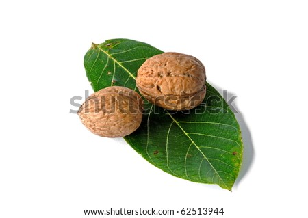Walnuts on leave