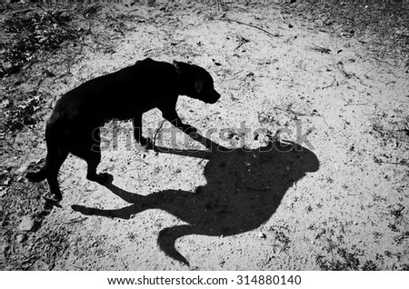 Wandering dog is followed by its shadow