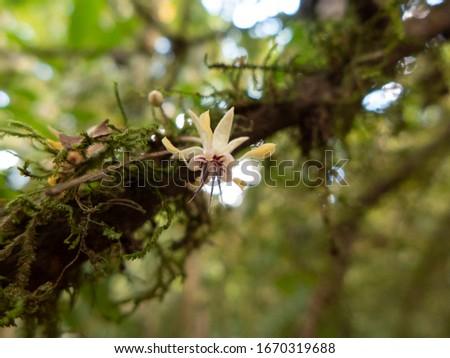 Wanderung durch das Tirimbina Regenwald Reservat bei Puerto Viejo in Costa Rica. Orchideen, Bromelien, und Epiphyten am Wegesrand Foto stock ©