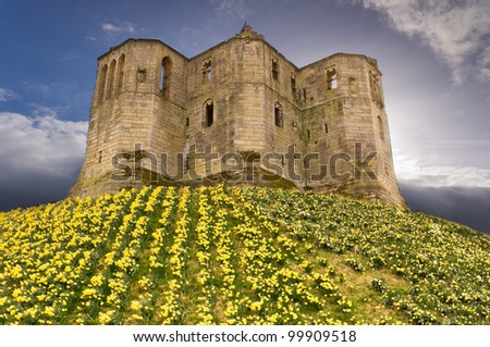 Warkworth Castle in the sky / Spring daffodils below the Keep at Warkworth Castle