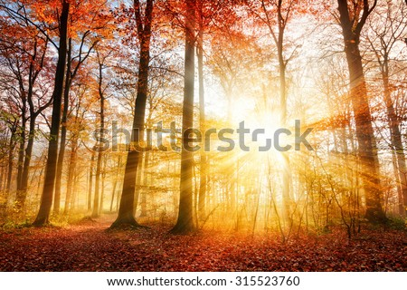 Stock Photo Warm autumn scenery in a forest, with the sun casting beautiful rays of light through the mist and trees