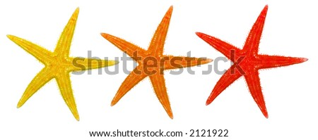warm color starfish group isolated on a white background
