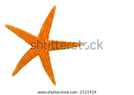 warm color starfish isolated on a white background