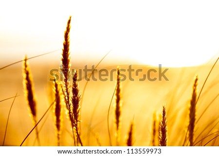 warm colored, dreamy, dfocused landscape with some plants in front