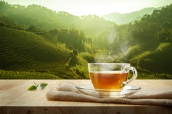 Warm cup of tea and organic green tea leaves on wooden table with the tea plantations background