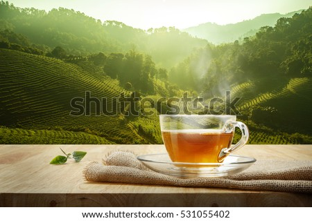 Warm cup of tea and organic green tea leaves on wooden table with the tea plantations background #531055402