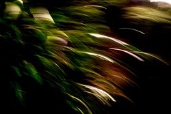 Warm green, brown and white, mountainside vegetation light-streak pattern in heavy shadows - abstract, motion-blurred background texture