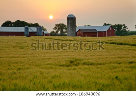 Warm hazy summer sunset over farm and grain field