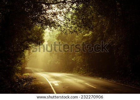 Stock Photo warm light falling on a road in a dark forest