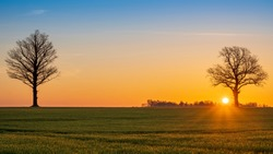 Warm sunrise over open agriculture field with large sun and tree silhouette
