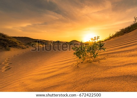 Warm sunshine with small tree on sand dunes. #672422500