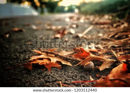warm toned autumn themed picture; orange leaves and acorn during sunset