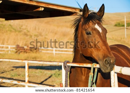 Warmblood Mare in Pasture