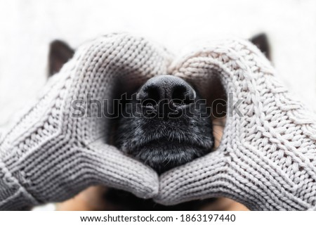 Warming up for winter. Valentine's day with man's best friend dog. Face of German shepherd dog close up of puzzle or calendar. Black leather dog nose in the heart of hands in knitted beige mittens. Stock fotó ©