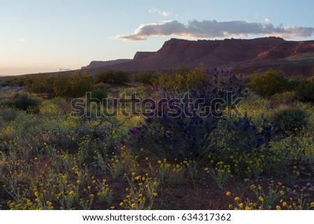 Warner valley near St. George Utah at sunset with spring wildflowers in full bloom. #634317362