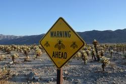 Warning Sign Bees Cholla Cactus Garden