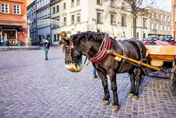 Warsaw, Poland - December 18, 2019: Historic buildings and horse carriage tour in old town during winter Christmas holiday with animal eating from feed bag on street