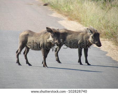 Warthog's on tar road.