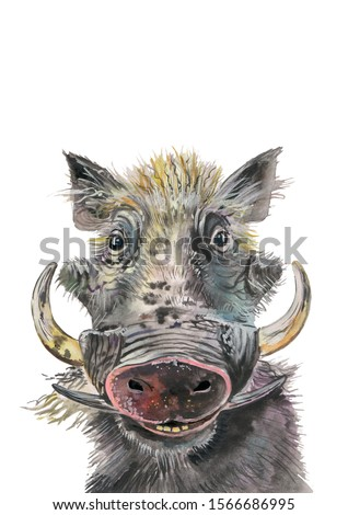 Warthog, wild boar, forest animal.