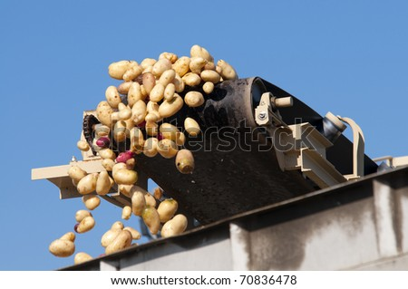 Washed potatoes fly off conveyor belt into waiting trucks at packing plant