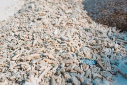 Washed up bleached coral on white sand beach. Tropical beach closeup coral texture backgound. Beach sand wallpaper, golden white coral beach wallpaper, seashells & sand. Destruction of coral reef.