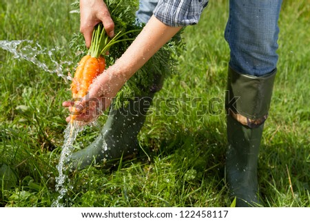 Washing bunch of carrots under water