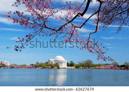 Washington DC Cherry Blossom in Spring with Jefferson memorial over lake.
