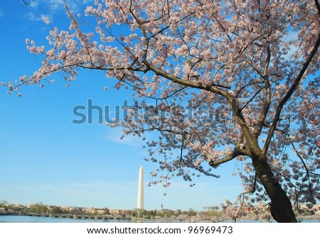 Washington DC Monument ,and Cherry Blossom Festival USA