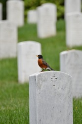 Washington DC - The bird on a tombstone in Arlington National Cemetery