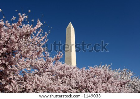 Washington Monument in blossom