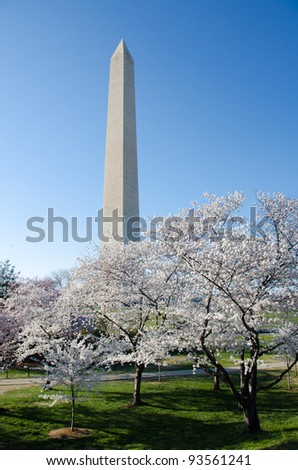 Washington Monument in spring, Cherry Blossom Festival - Washington DC United States
