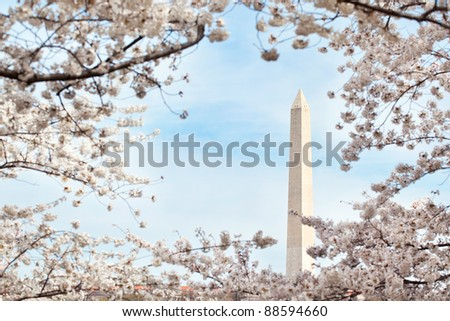 Washington Monument in Washington, DC in a frame of cherry blossoms