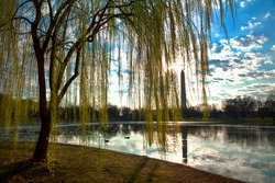 Washington Monument Over Pond and Weeping Willows