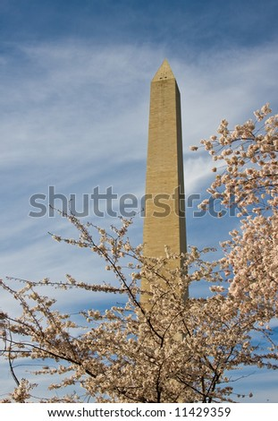 Washington Monument with a layer of cherry blossom flowers at the base