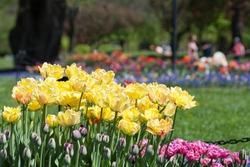Washington Park in Albany, New York ready for the Tulip Festival.