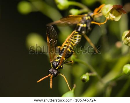 Wasp - stock photo