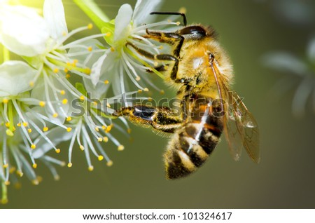 wasp collecting pollen from a flower of the tree