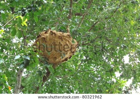 Wasp nest - stock photo