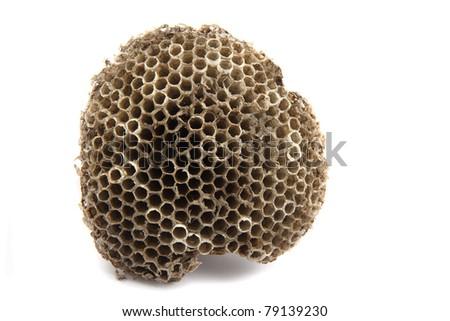 wasp nest isolated on the white background - stock photo
