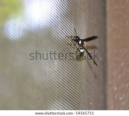 wasp on screen