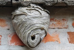 wasp's nest under some roof