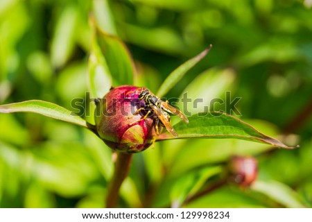 Wasp sitting on a pink flower