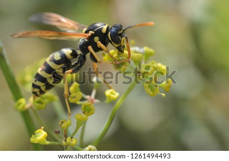 Wasp, Wasp  on flower