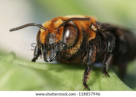 Wasps / hornet