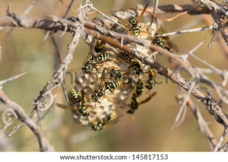 wasps in nature. macro