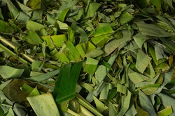 waste from pieces of banana leaves that have been cut into shreds for easy degradation