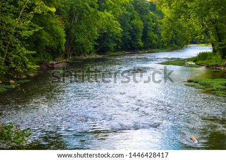 watching the water flow down the creek #1446428417