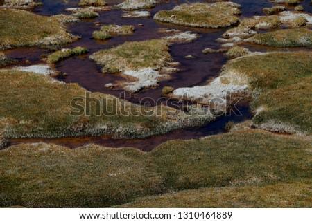 water and desert vegetation #1310464889