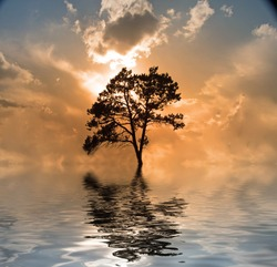 Water and tree sunset. Exosolar planet